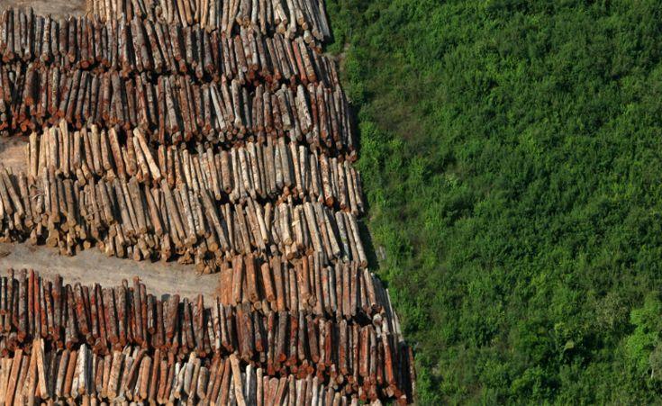 O Brasil é um país bovino. O Estado brasileiro sinaliza que apoia o desmatamento, apesar de políticas setoriais de controle  http://controversia.com.br/2771