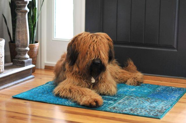 Hund og patchworkteppe fra Tyrkia. En ganske fin kombinasjon!