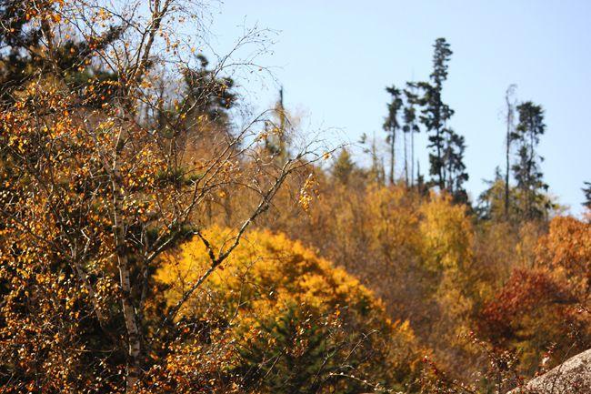 mi casita en el bosque: Otoño en La Cumbrecita
