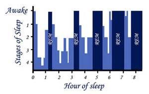 The hours of REM/NREM sleep