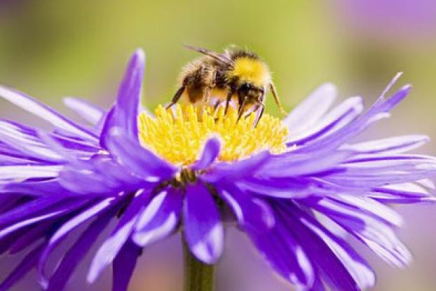 17 Best images about Bees on Pinterest | The long, Adobe ...