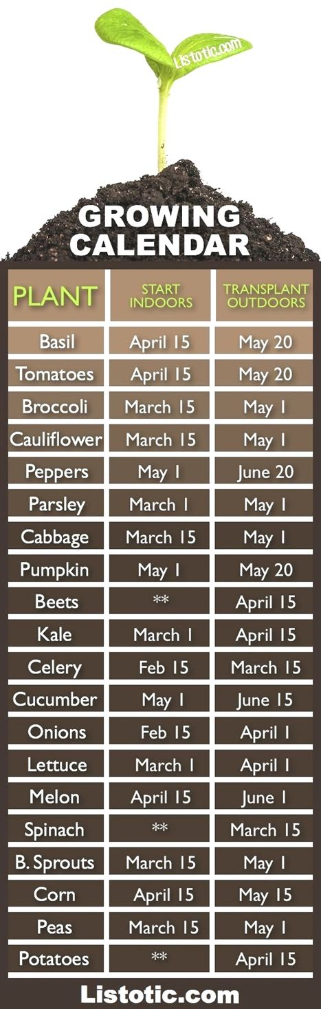 When to plant your vegetable garden.... When to plant what? Time to get started!...