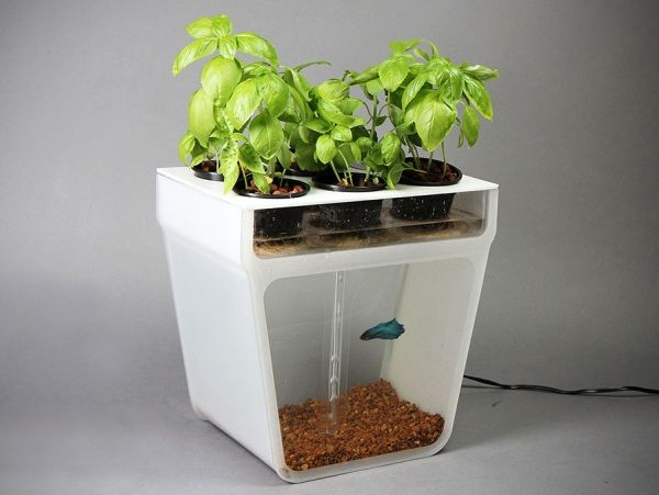 Akvaponie - pěstování zeleniny díky rybičkám v akváriu | Bydlení pro každého