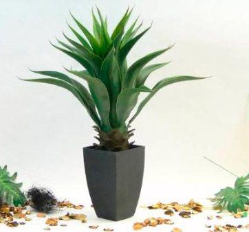17 mejores ideas sobre plantas artificiales en pinterest for Plantas decorativas artificiales df