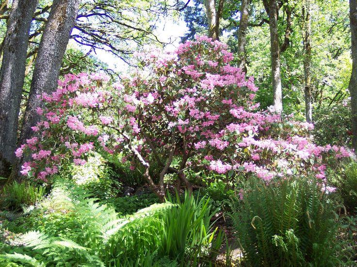 hendrick's park rhododendron garden