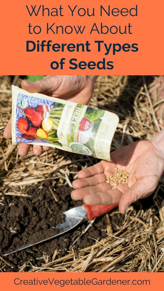 Before you go seed shopping you should know what you're looking for!