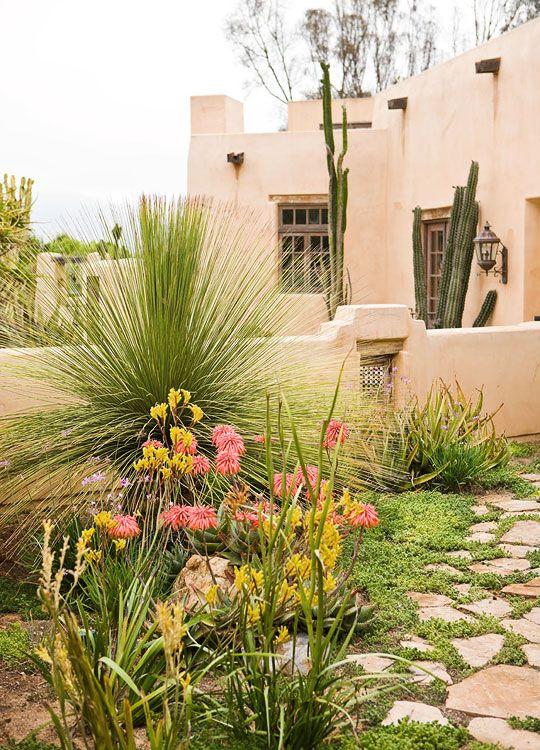 Southwest Garden   Pink Aloe Striata, Yellow Kangaroo Paws, And Dasylirion  Longissimum (Mexican
