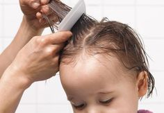 Treat Head Lice Quickly and Easily With These Tips
