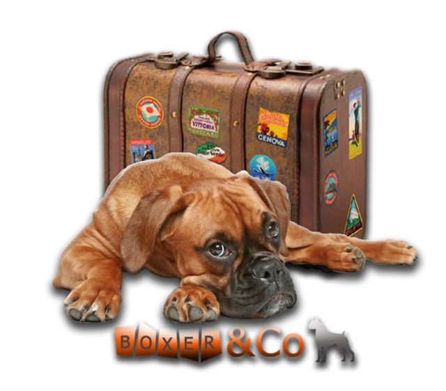 Boxer&Co Welcome to Adopt a Boxer Rescue