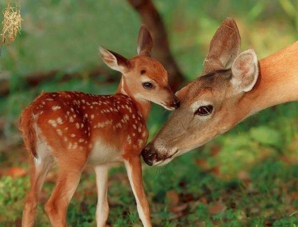 Schöne Tierbilder Teil 2. Mehr Inspiration für Ihr Zu