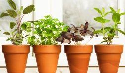 apprenez à faire germer pépins et noyau de fruits pour les transformer en plantes