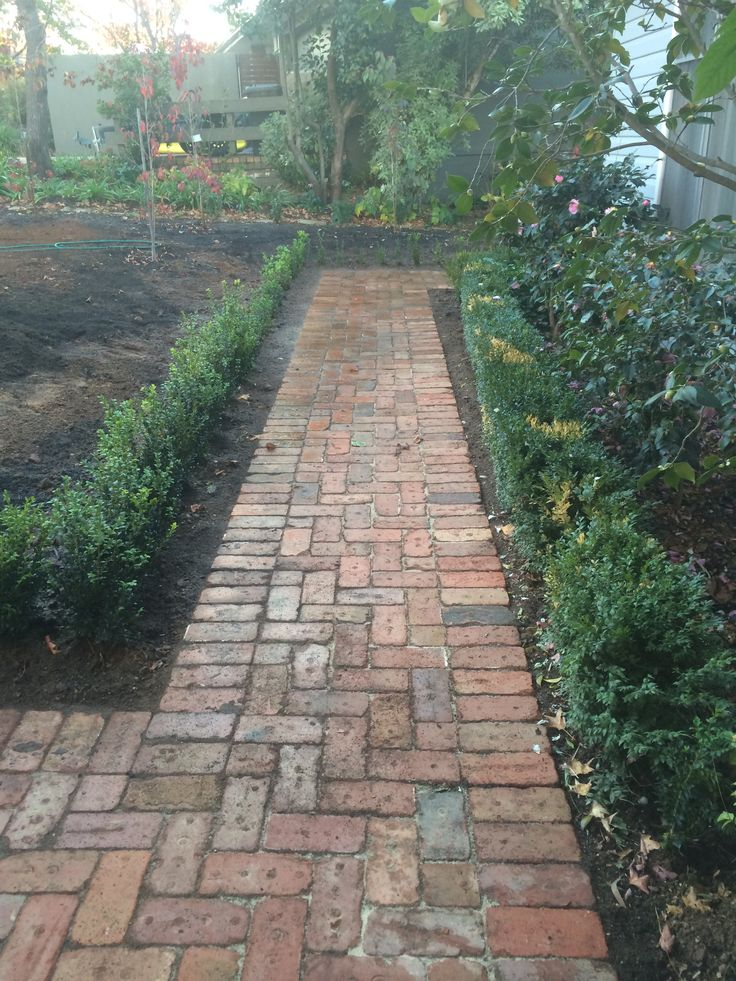 Paving using old Canberra red bricks with English Box hedging plants.