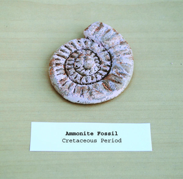 Let kids make their own ammonite fossil with breaddough. Salt Dough Recipe: 1 Cup Salt - 1 Cup Warm Water - 2 Cups Flour. Mix flour and salt together. Slowly add the water. You may not need to add all of the water. You want your dough to be pliable and easy to mold, like the consistency of play-dough.