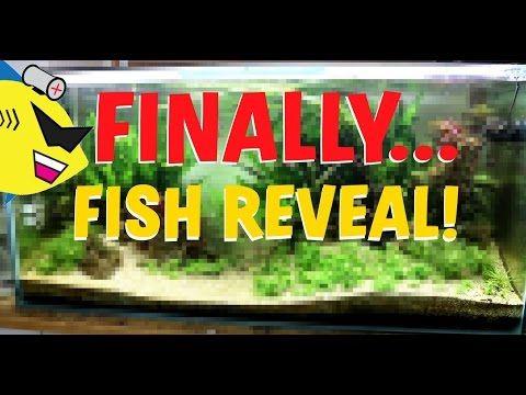 BIG FISH REVEAL! 40 NEW FISH IN THE AQUARIUM! - YouTube