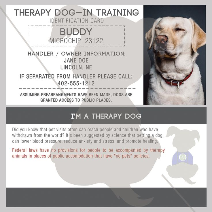 223 Best Business Cardlogo Images On Pinterest Therapy Dogs