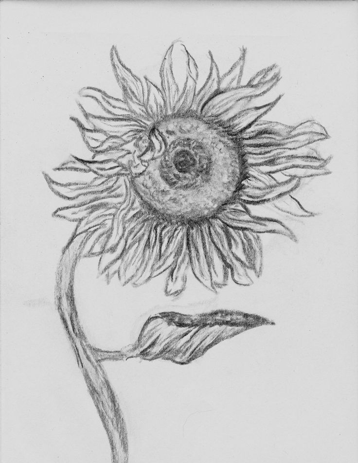 how to draw a sunflower step by step easy - Google Search ...