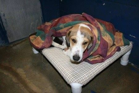 I spent almost 30 minutes in a gas chamber but I survived! Now together we need to conquer the gas chambers in our country. Please sign and share this petition to outlaw gas chambers as a means of euthanizing animals in the US!   https://petitions.whitehouse.gov/petition/outlaw-use-gas-chambers-means-euthanizing-animals/mqYp0jPk