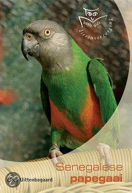De Senegal papegaai, ook wel bekend als 'bonte boertje', wint de laatste jaren aan populariteit als huiskamervogel. Hetzelfde gaat op voor veel andere zogenaamde Poicephalus-papegaaien.