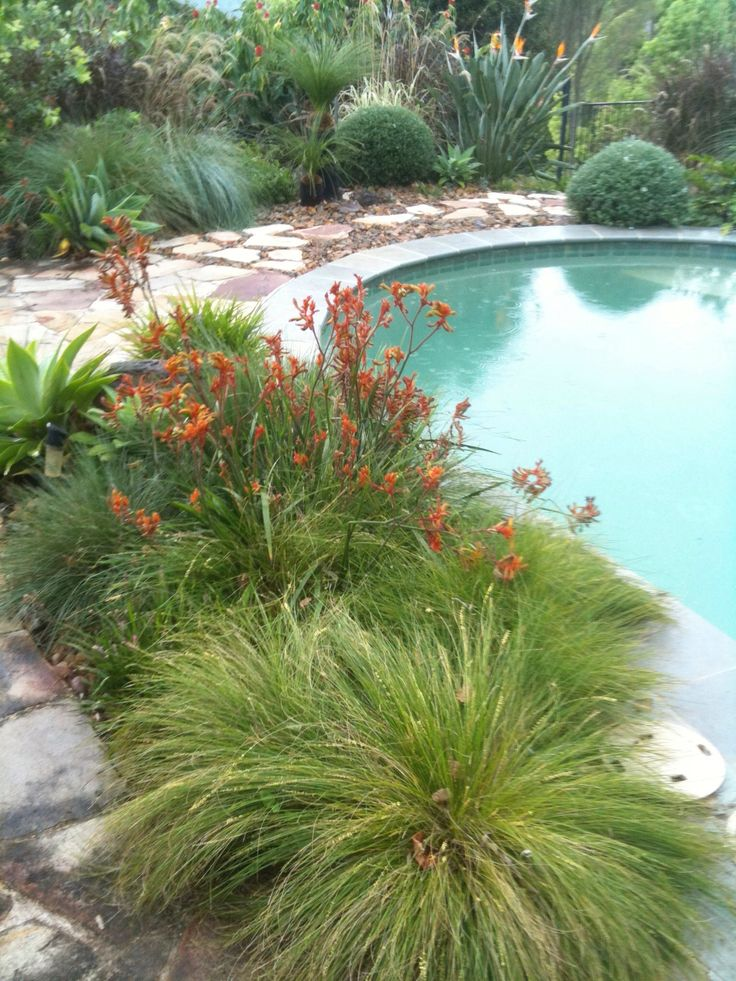 A garden built around a pool with native 'grasses' and Anigozanthus in the foreground