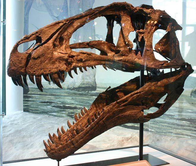 Acrocanthosaurus atokensis, Early Cretaceous 116-110 Million Years