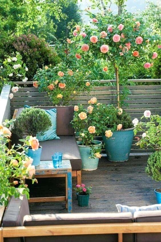 Balcony Plant Pots Online India Planting Growing Roses In Containers Patio And Terrace For Knockout Railing Garden