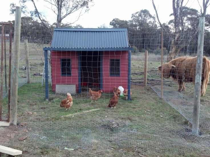 how to build a chook house