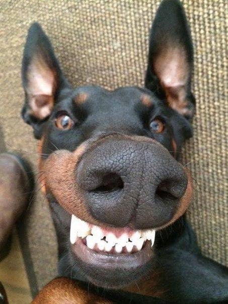 TOP 25 lustige Hunde und Welpen Bilder – Funny D…