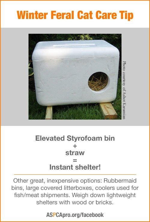 In cold weather, shelter is actually more important for stray animals.  Here are some suggestions for making shelters for ferral cats.  Good ideas.