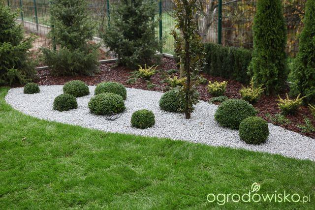 Ogród z lustrem - strona 93 - Forum ogrodnicze - Ogrodowisko
