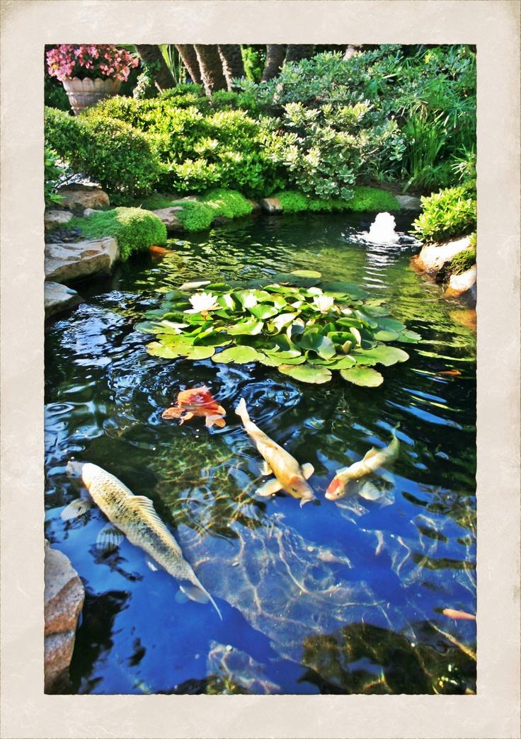 Zen Garden Encinitas Ca Zen Spaces Pinterest Gardens Cas And Love This