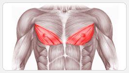 Нижняя часть груди