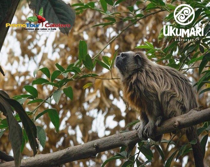Bioparque Ukumari
