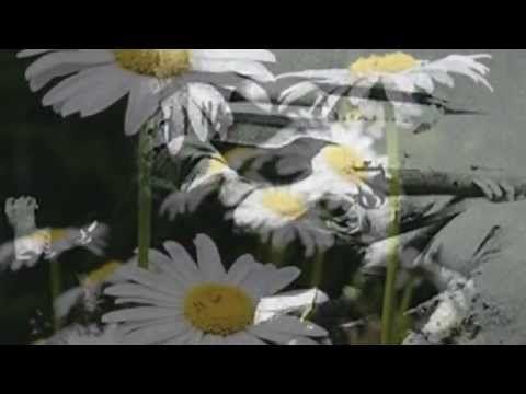 """Ewa Demarczyk - """"Niebo złote Ci otworzę..."""". - YouTube"""