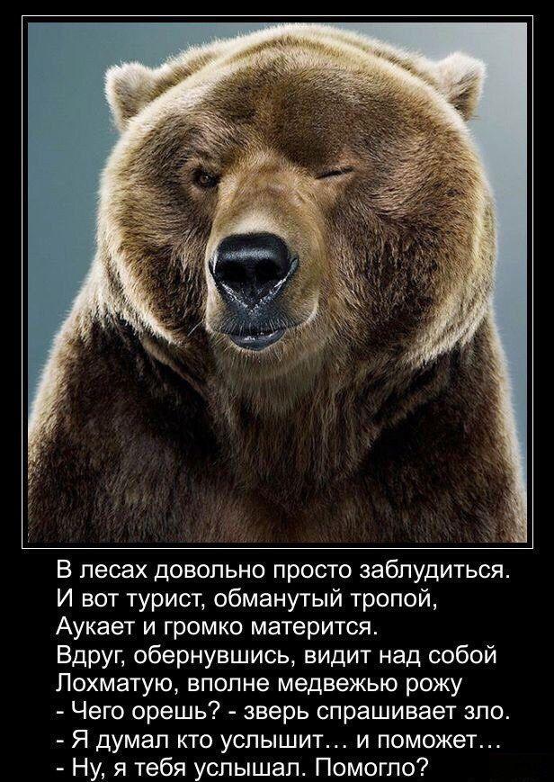 вам интересно, статус картинка медведь сих пор