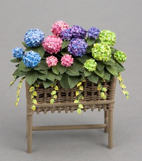 Mixed hydrangeas & trailing gold euonymous in a wicker planter by P. Taylor