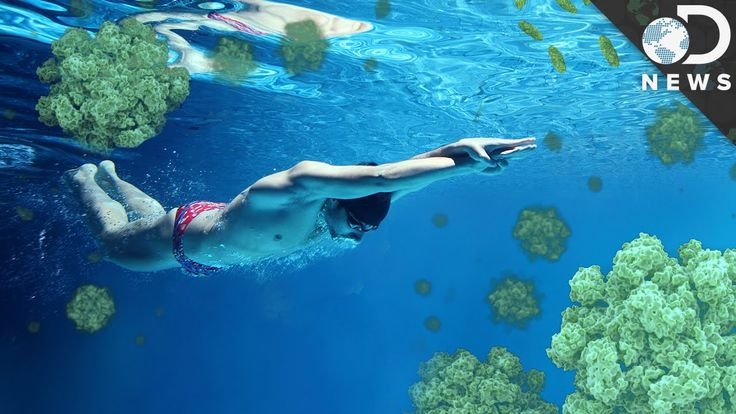 What Diseases Can You Catch While Swimming?