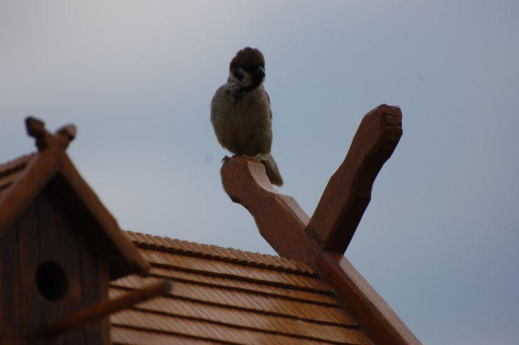 Shelter for birds. Budka dla ptaków. Vogelhäuschen.