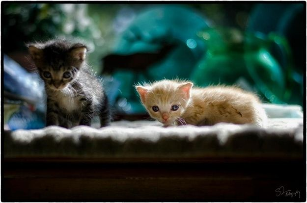 Two Tiny Kittens Rescued From A Junk Pile  These itsy bitsy charmers were rescued by photographer Scott Allan after he found them in a junk pile near the side of his house.