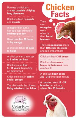 Chicken Facts Leaflet Cedar Row Farm Santuary