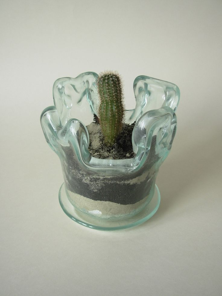 A glass flower pot with a small cactus