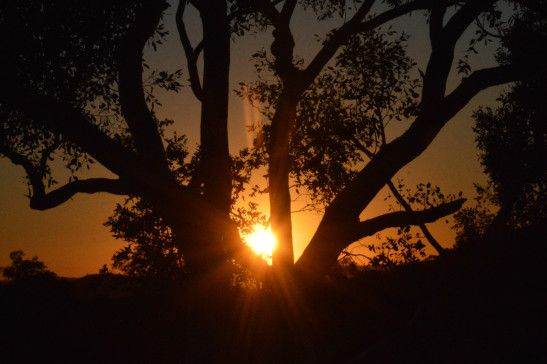 Beautiful Sunset at on way to Port Hedland