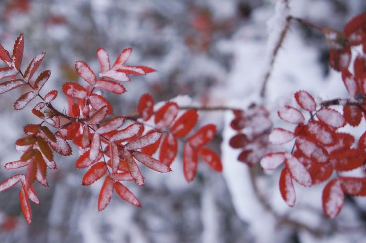 first-snow6.JPG (900×598)