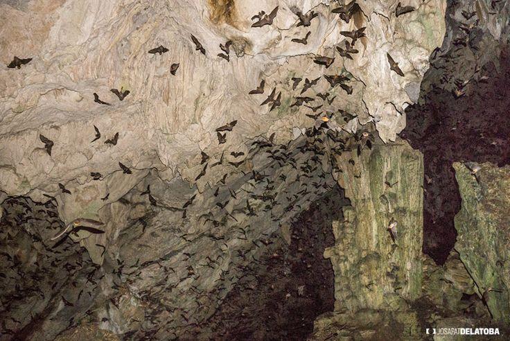 Caves of Lanquin in Guatemala #josafatdelatoba #cabophotographer #travels #guatemala # #landscapephotography #semucchampey #waterfall