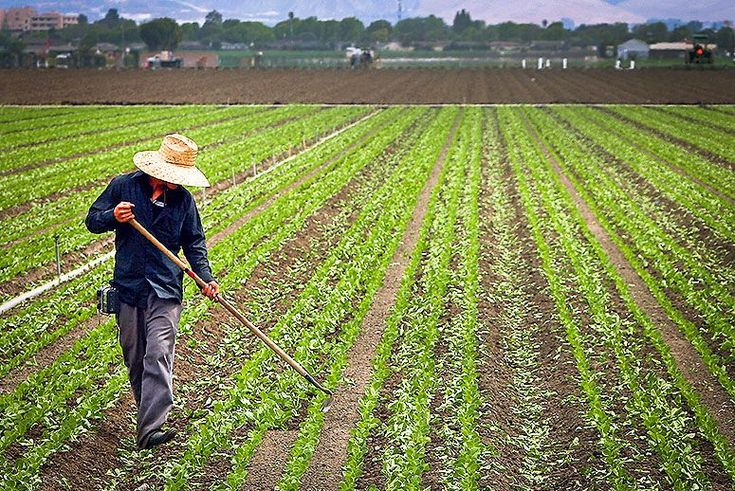 Nice Opinion: Farmers Say Trumpu0027s Immigration Policy Threatens Their  Bottom Line