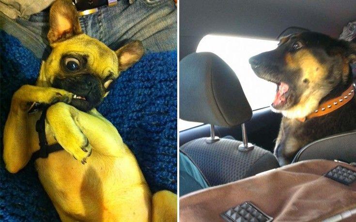 Οι πιο αστείες εκφράσεις σκύλων (φωτό)