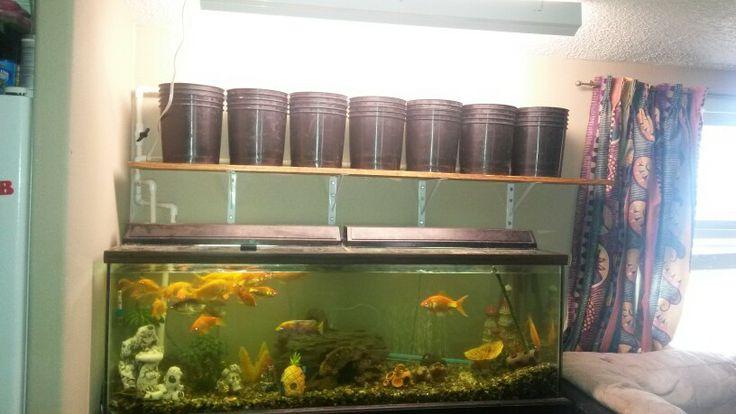 47 best aquaponics images on pinterest indoor gardening for Aquaponics fish tank for sale