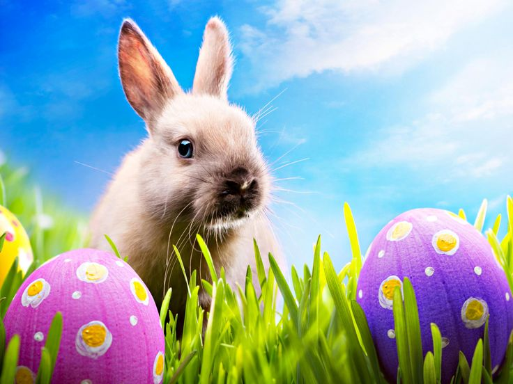 201 best easter images on pinterest accessories austria info easter egg stock photos and images easter egg pictures and royalty free photography available to search from over 100 stock photo brands negle Images