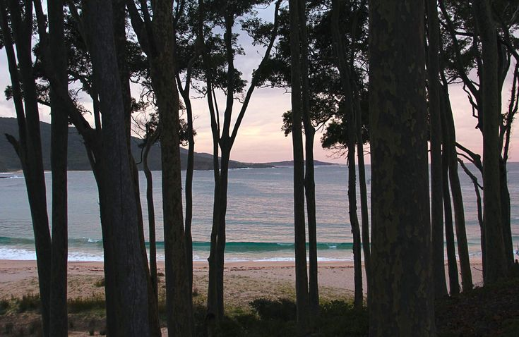 Depot Beach (4 hours South of Sydney) Looking through the trees out to sea on sunset. Photo:John Yurasek