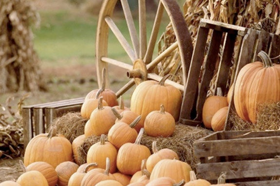 @Molly Forte Places to Pick pumpkins on Boston's North Shore, Massachusetts!