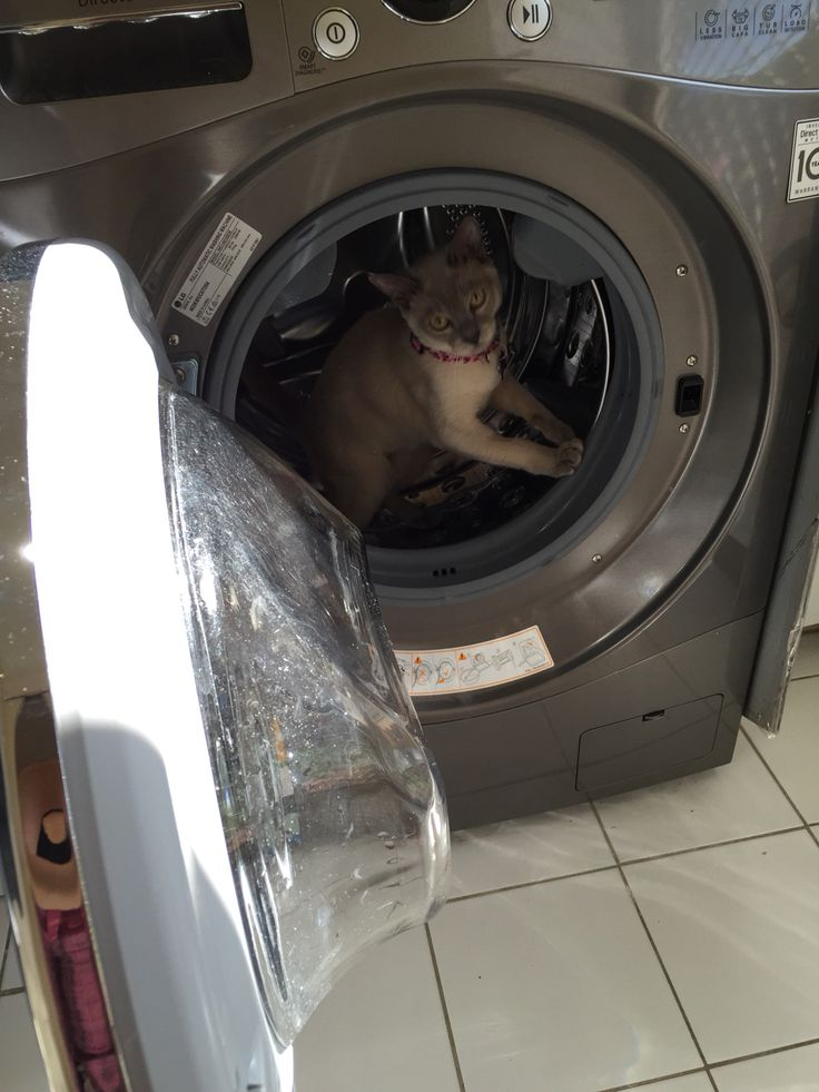 Please wash burmese on warm gentle cycle! Lucinda will get into anything